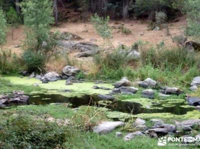 Paseo y Baño por el Valle y Río Tiétar;berrea monfrague viajes organizados a madrid puente de san
